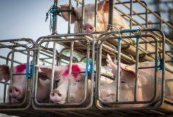 ВТО подложила России свинью