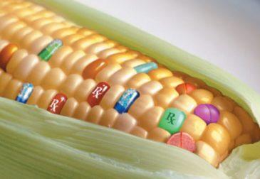 ЕС: генномодифицированные продукты наступают