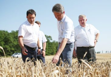 Рекордный урожай зерна в России