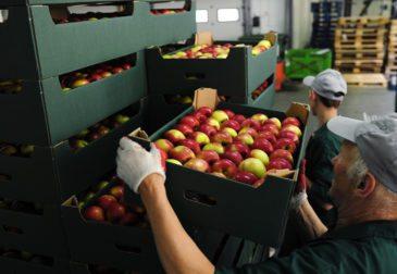 Успех белорусских экспортеров: поставки в 5 раз превысили собранный урожай