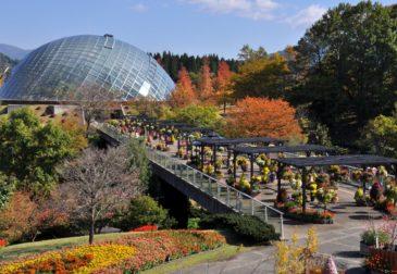 В Японии зафиксировано землетрясение магнитудой 6.6