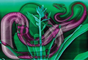 Сочетание искусства и науки сквозь призму снимков рентгена