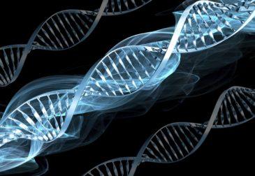 Новейшее открытие в генной инженерии