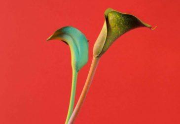 Жизнь цветов Алессандры Д'Иннеллы
