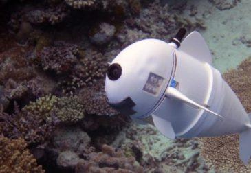 Может ли рыба-робот узнать секреты подводного мира