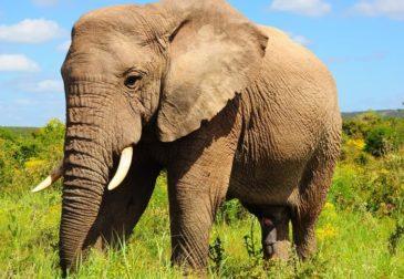 Глобальное потепление угрожает половине видов животных