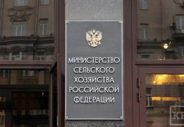 Рекордный экспорт: Россия снова кормит весь мир