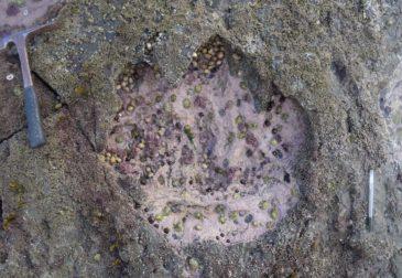 В Шотландии найдены следы динозавров Юрского периода
