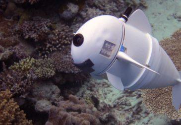 Смогут ли рыбы отличить своих сородичей от умного робота?
