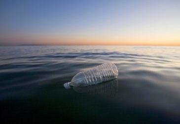 Загрязнение мирового океана порождает все новые жертвы