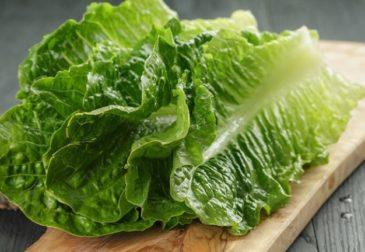 Никакого салата! CDC призывает отказаться от салата ромэн из-за  кишечной палочки