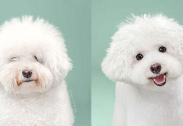 Очаровательные фотографии собак до и после стрижки