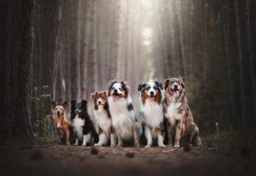 Собачья жизнь в фотографиях Кристины Квапиловы