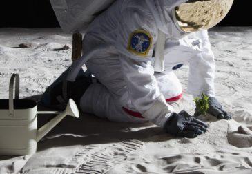 Первое растение на пустынной Луне