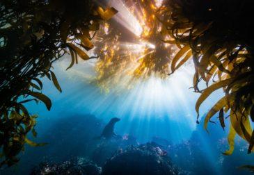 Победители фотоконкурса Ocean Art 2018, воспевающие красоту подводного мира