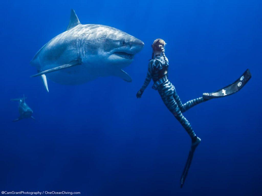 Большая белая акула (Кархародон). Фото и видео большой белой акулы.   766x1024