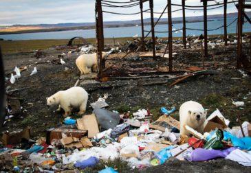 Борьба с мусорными отходами или глобальные последствия?