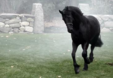 Знакомьтесь, лошадиный парикмахер. Как создается невероятный дизайн лошадей