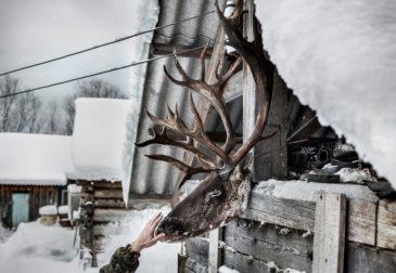 Снежный лес России в картинках