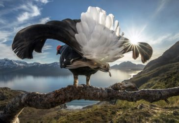 Удивительные победители BigPicture Natural World 2019