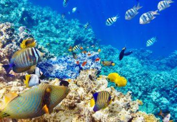 Самые яркие обитатели коралловых рифов