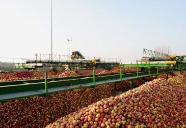 ЕС приостановил импорт украинских фруктов и овощей
