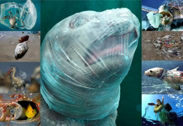 К 2050 году в море будет больше отходов, чем рыб!