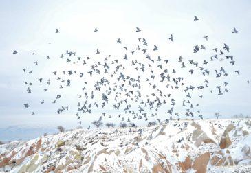 Birds Records: Яндекс.Музыка и WWF запустили лейбл
