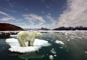 Самый жаркий январь за историю наблюдений: 2020-е обещают быть еще теплее