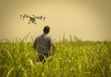 Голландские ученые внедряют новые технологии в сельское хозяйство, чтобы накормить мир