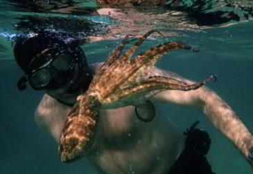 Любовь на дне Атлантического океана: Крейг Фостер и осьминог