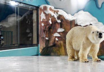 """Сказка """"Три медведя"""" стала былью"""