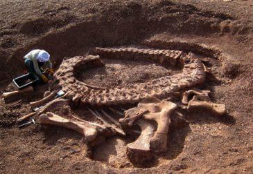 В Аргентине найден самый старый динозавр